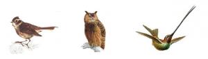cronotipos alondra buho colibrí
